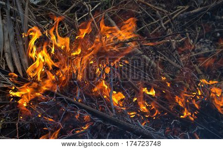 Forest fire close up photo. Burning wood and tree branches. Natural fire materials of outdoor fire. Small bonfire on picnic. Forest danger during dry season. Heat and fire in wild nature concept image