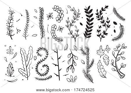 Hand drawn decorative branches with leaves and flowers doodle floral vector elements set. Set of branch plant, sketch of floral plant illustration