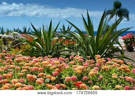 Dream travel destination all year - Caribbean region, Curacao island, Netherlands Antilles - blue sea and colorful flowers palm trees