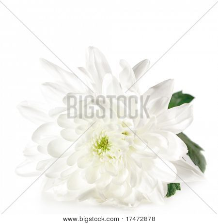 White Flower with Green Leaf Isolated on White Background