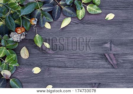 Wooden brown background with green and yellow leaves empty space