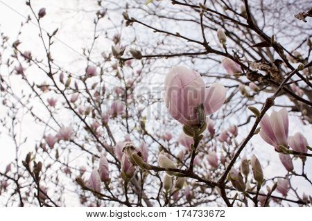 Styled Stock photo: France Paris, Spring Beautiful flower