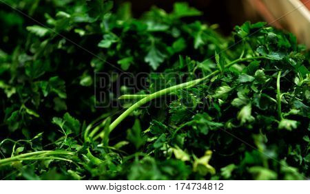 Buying fresh Parsley at the Farmer's Market