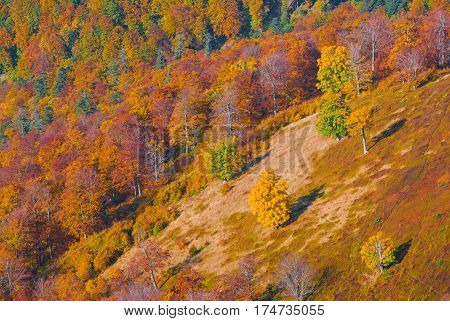 Bright colorful autumn forest on a Carpathian mountain hill
