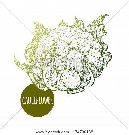 Cauliflower. Hand drawing vegetables Cabbage. Vector illustration art. Green and white. Vintage engraving. Kitchen design.