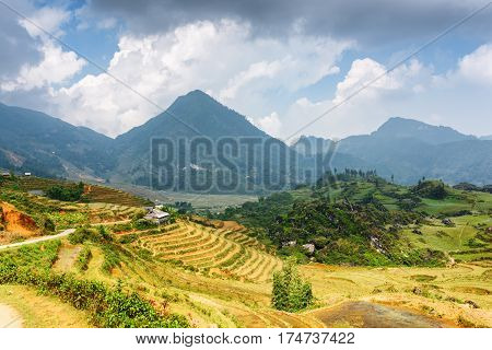 View Of Rice Terraces At Highlands Of Sa Pa In Vietnam