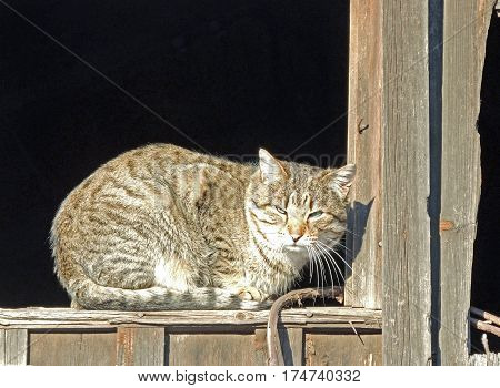 The cat is basking in the sun. The window in the attic
