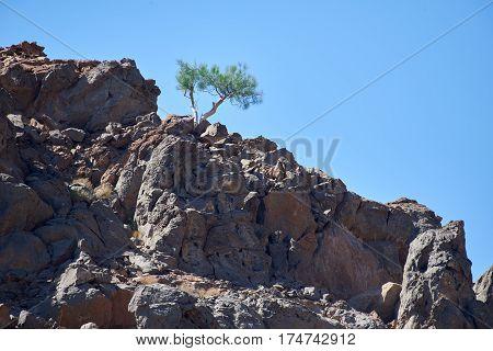A shrub surviving in an inhospitable environment
