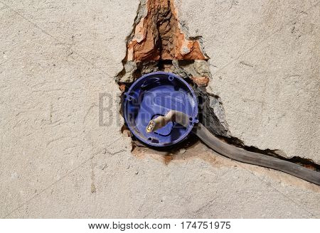 Electrician Dismantling Broken Wall Electric Socket. On Grey Concrete Wall