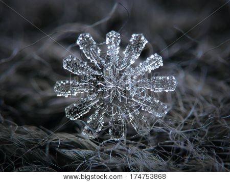 Macro photo of real snowflake: big snow crystal with twelve arms and fine symmetry glittering at dark gray wool background in natural light of cloudy sky.