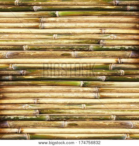Textured background Natural bamboo fence; bamboo background.