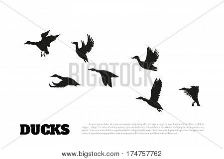 Black silhouette duck flocks on a white background. Vector background