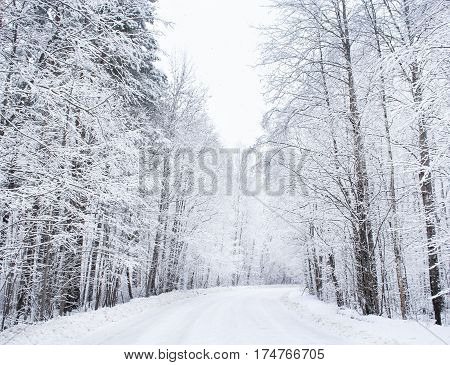 The road in the winter forest. Winter snow-covered forest species of wild nature.