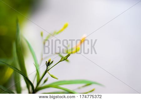 Flowering grass close up nature background and textrue