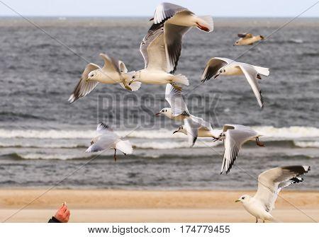 Bread For Gulls