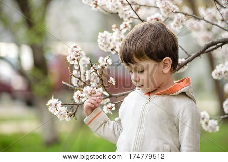 toddler boy in spring time near the blossom tree smiling happy boy