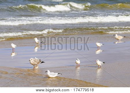 Seabirds on a Sandbank in the breakwater on the island of Usedom in Poland.