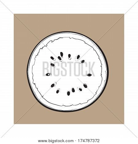black and white Half of ripe watermelon with black seeds, top view sketch style vector illustration isolated on background. Realistic hand drawing of ripe watermelon cut in half