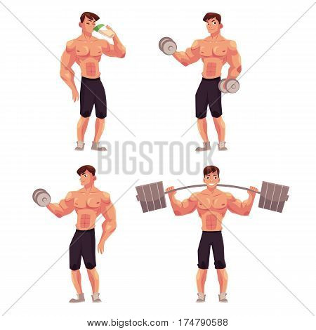 Young man, male bodybuilder, weightlifter working out with barbell and dumbbell, drinking protein shake, cartoon vector illustration isolated on white background. Male bodybuilder in various positions