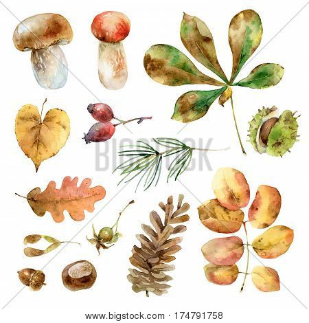 Bright autumn set with different leaves, mushrooms, and other elements. Watercolor illustration