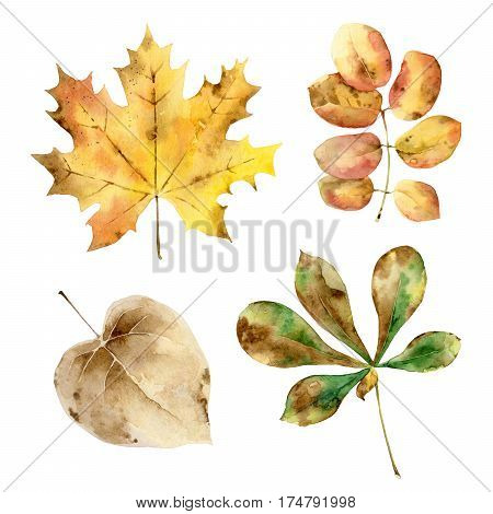 Set of watercolor autumn leaves isolated on white background