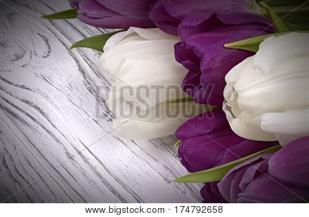 Purple And White Tulips With White Paper On A White Wooden Background. Space For Text. Womans Day. 8