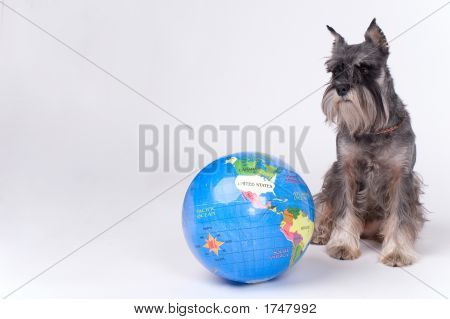 Dog And The Globe