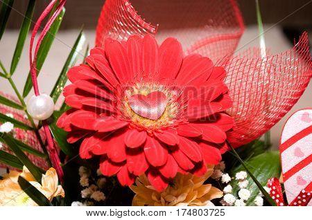 Red roses splendor of its beauty and freshness, Novi Sad, Serbia