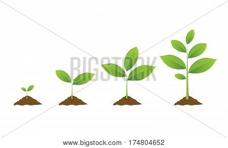 Infographic of planting tree. Seedling gardening plant. Seeds sprout in ground. Sprouts plants trees growing icons. Seedling agriculture. Vector illustration isolated on white background.