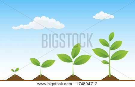 Infographic of planting tree. Seedling gardening plant. Seeds sprout in ground. Sprouts trees growing icons. Seedling agriculture. Plants growing on beautiful landscape. Vector illustration.