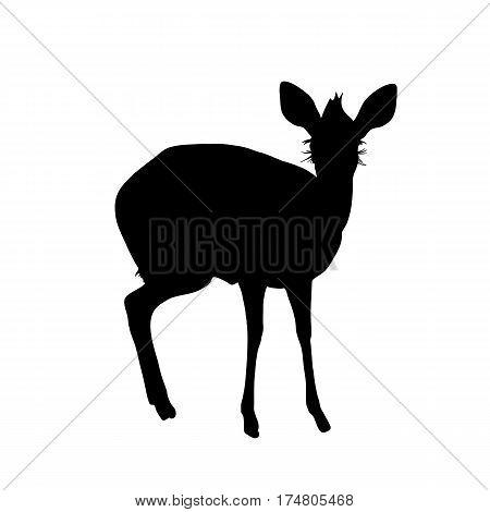 Damara Dik Dik, small Antelope - Silhouette - digitally hand drawn Vector Illustration