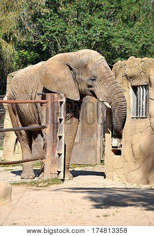 view of African animals - elephant safari