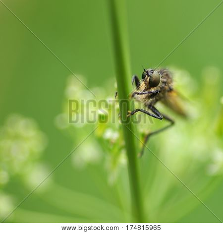 Fly sitting on the grass in meadow