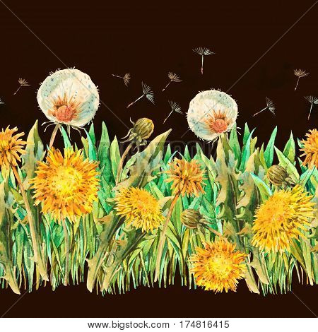 Watercolor seamless border with spring flowers yellow and white dandelions, butterfly. Natural hand painted floral watercolor illustration on black background