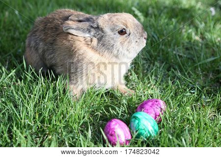 easter bunny with colored eggs in garden