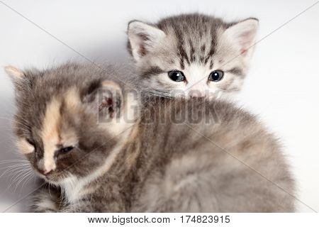 two little young cats are sitting on the ground