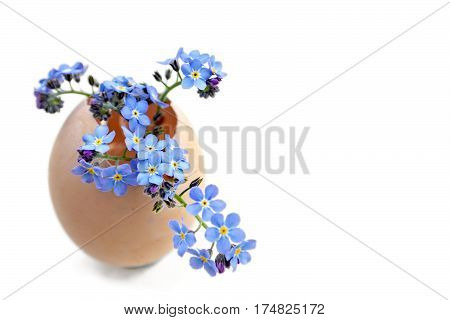 Easter flowers in eggshell isolated on white background