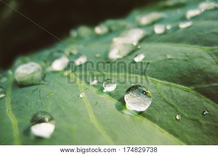 Fresh Water Drops On Green Plant Leaf. Greenery, Green: Pantone Color - Trend 2017