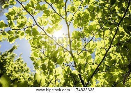Spring leaves background with sunlight and blue sky