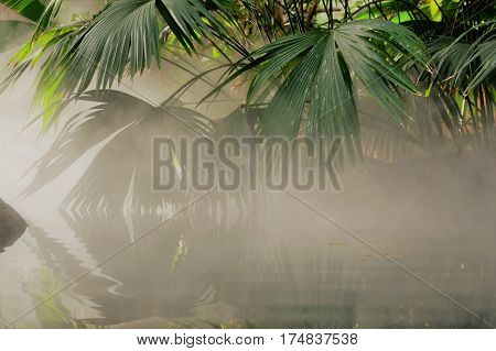 Mist over the water and palm fronds