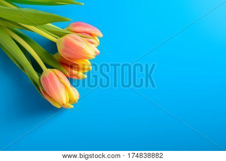 Pink Tulips On A Blue Background
