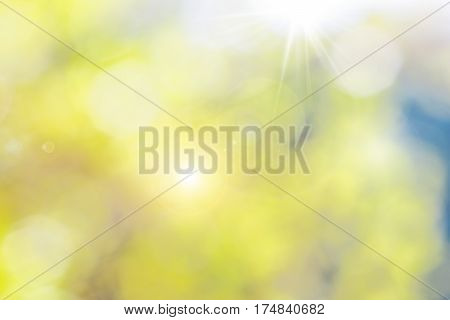 Blurred background of a summer garden with sun rays and glare in foliage