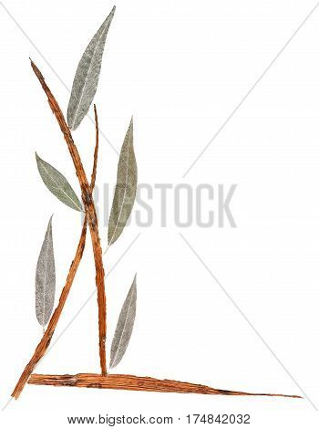 Application  Bouquet Of Dry Iris Leaves And  Weeping Willow