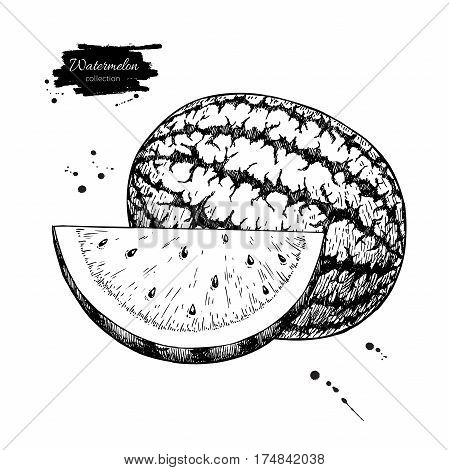 Watermelon and slice vector drawing. Isolated hand drawn berry on white background.  Summer fruit engraved style illustration. Detailed vegetarian food. Great for label, poster, print