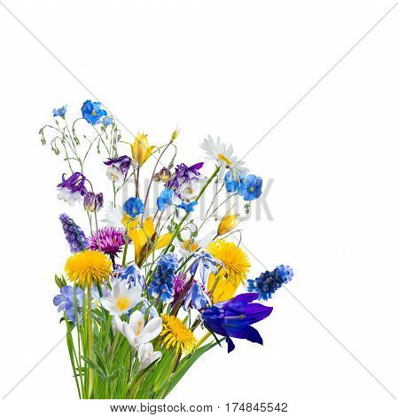Different Wild Flowers Isolated