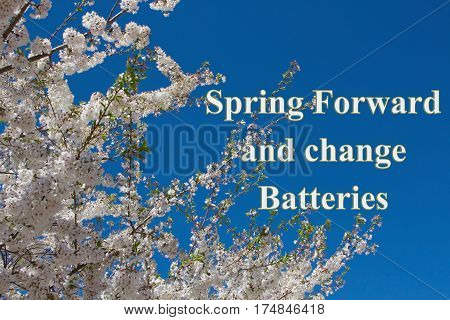 Spring Forward message A tree in full spring blossom with sky background with text Spring Forward and change Batteries