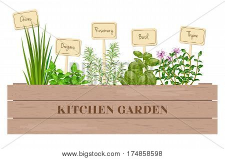 Wooden Crate Of Fresh Cooking Herbs With Labels In Wooden Box.