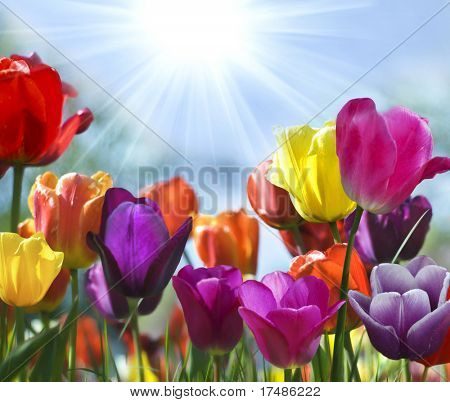 봄의 아름다움