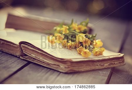 Old open book and yellow buttercups on a wooden table.