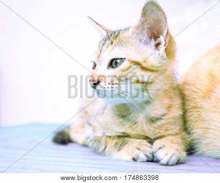 Small kitten on wooden bench. Young cat on wooden background. Countryside life of domestic cat. Village kitten on rustic board. Lovely brown kitty. Domestic pet living outdoor. Lovely animal on white